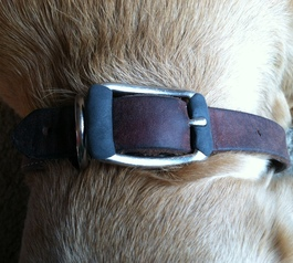 Silence your dog's collar