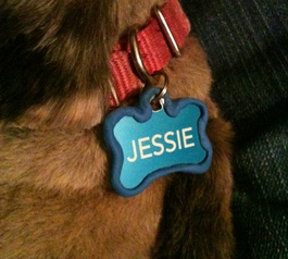 Make a dog collar less noisy