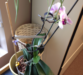 Make a support for an orchid