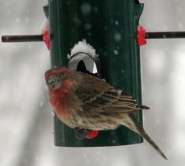 Fix perches on a finch feeder