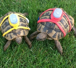 Track your pet tortoises (after)