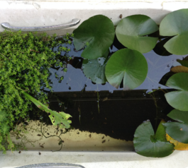 Turn an old bath into a garden pond