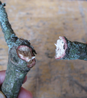 How to make beautiful hooks from twigs and sugru — Step 2