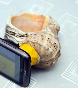 make a seashell into an amplifier